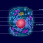 細胞の分解と合成